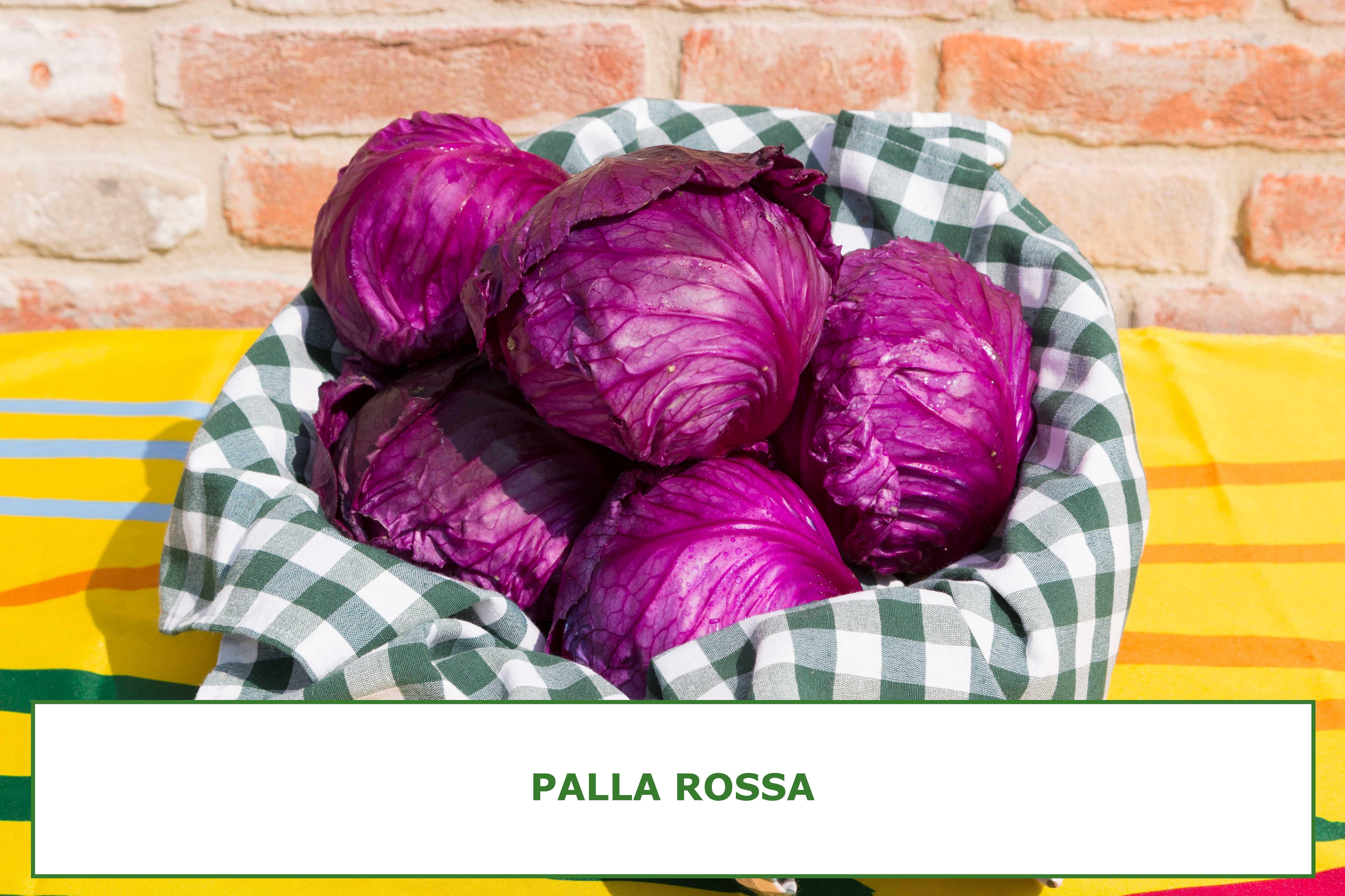 PALLA-ROSSA