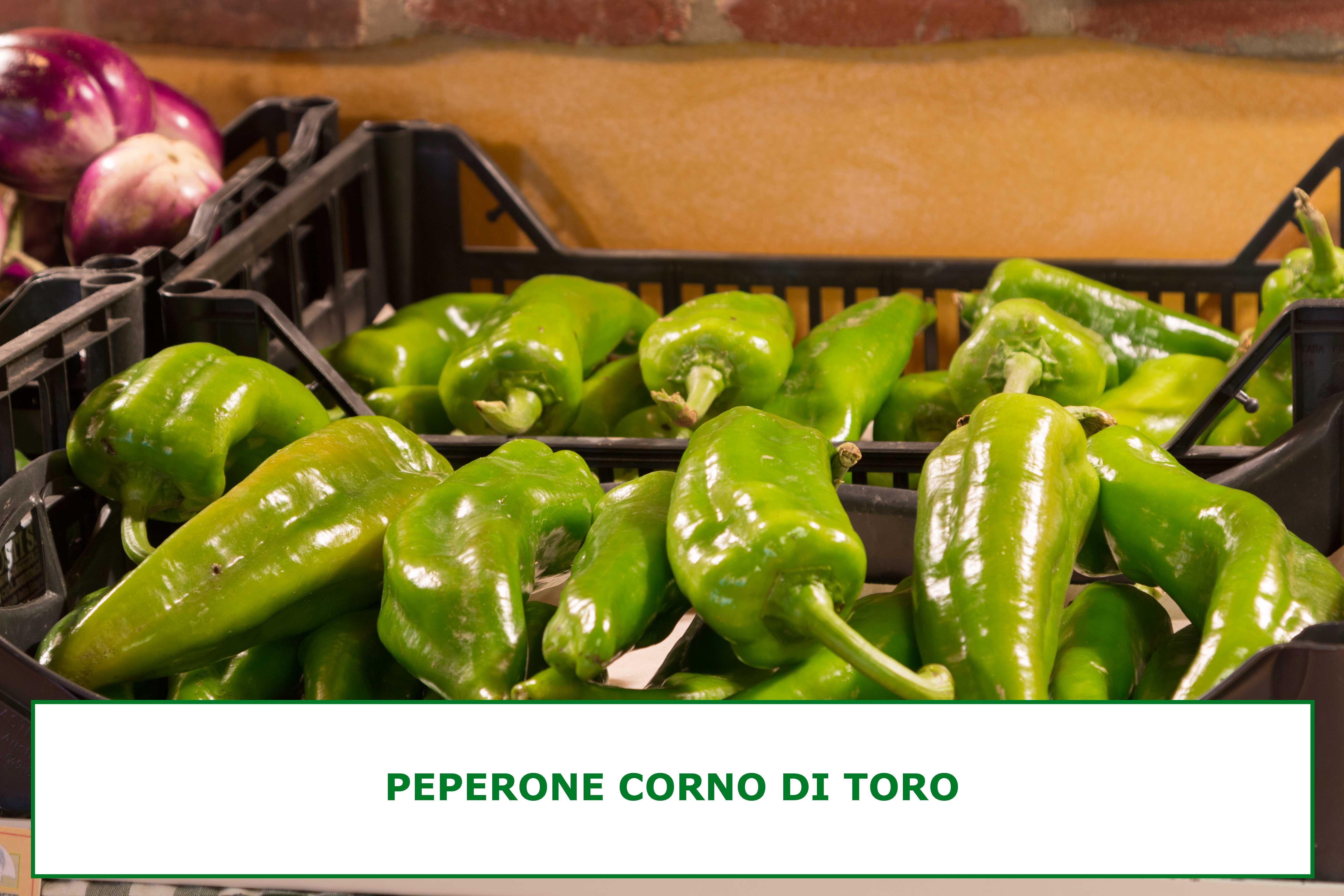 PEPERONE-CORNO-DI-TORO