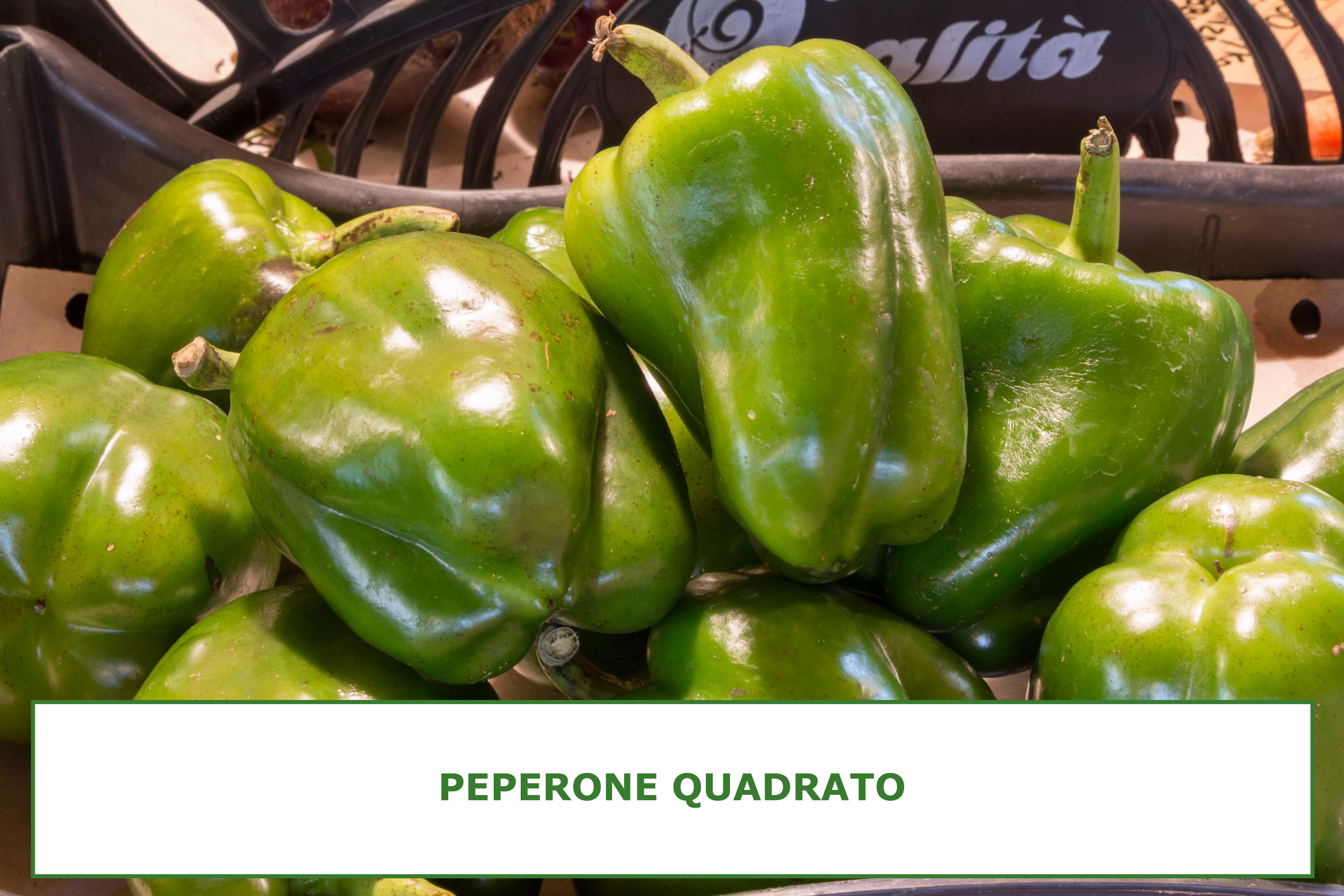 Peperone-quadrato